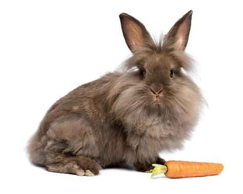 wallpaper rabbits carrots animal