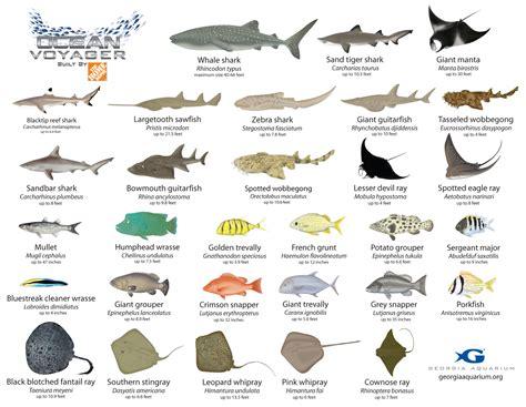 Aquarium Fish With Name  Fish Names Aquarium Fish Names Fish That You Might See 2016 Fish 2017
