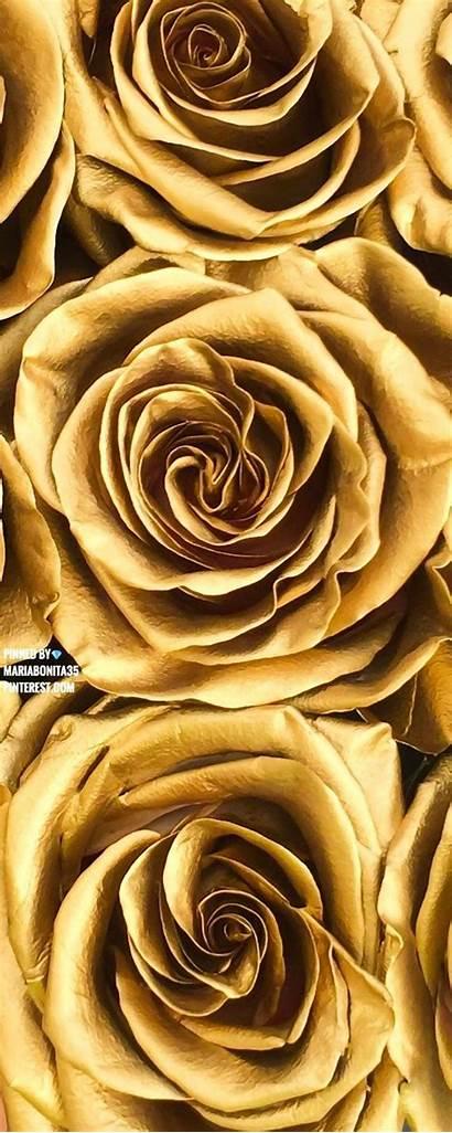 Gold Aesthetic Background Flower Backgrounds Dorado Rose