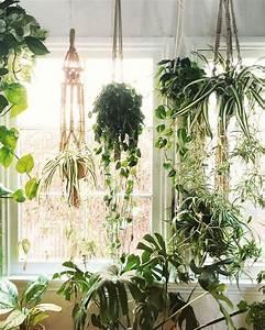 Indoor Hanging Plants www pixshark com - Images
