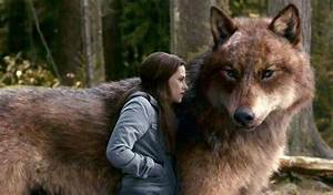 19 best images about Her Pet Wolf on Pinterest | Wolves, A ...