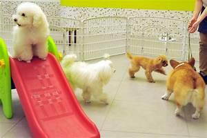 Hotel Pour Chien : un h tel pour les bats amoureux des chiens insolite ~ Nature-et-papiers.com Idées de Décoration