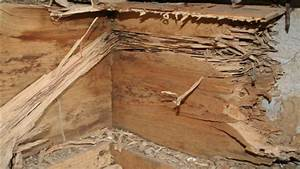 Uncovering Termite Damage In Your Home