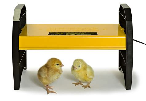 heat l for ducklings chook manor ltd coops chooks incubators feeds