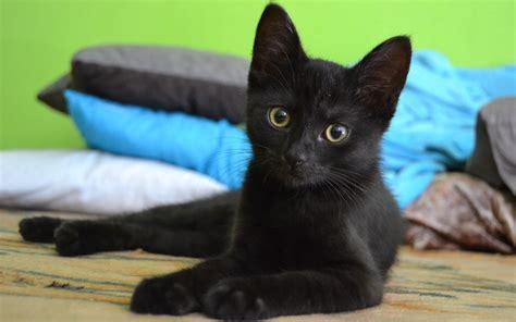 fond d écran chaton mignon fonds d cran chats chatons gratuits fond ecran chaton mignon chat roux blanc fond ecran chaton