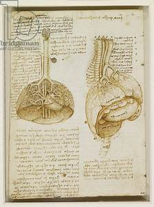 Study Of The Thoracic And Abdominal Organs  C 1508  Pen