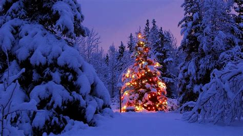christmas tree covered in snow 4k ultra hd wallpaper and