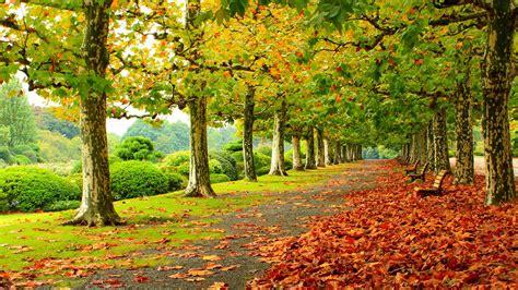 bench tree 照片 park 4k fall leaf bench alley 桌布