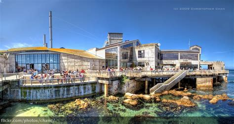 monterey bay aquarium california the monterey bay aquariu flickr photo
