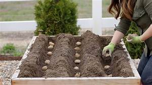 Diagram Of How Potatoes Grow