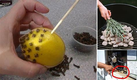 how to keep bugs away from patio 12 tricks that keep bugs away home design garden