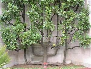 Arbres Fruitiers Nains En Pleine Terre : choisir un arbre fruitier ~ Premium-room.com Idées de Décoration