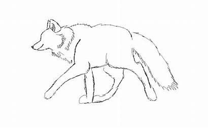 Wolf Walking Cycle Sketch Deviantart