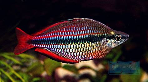 types  tropical fish beginner guide tips tropical