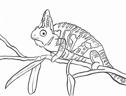 Coloring Chameleon Pages Printable Printables Samanthasbell Reference