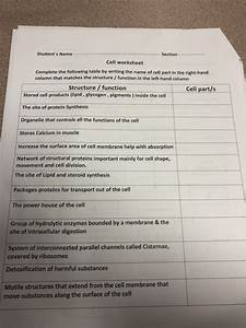 Solved  Student U0026 39 S Name Section Cell Worksheet Complete The