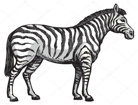 Zebra Outline Wwwpixsharkcom Images Galleries With A