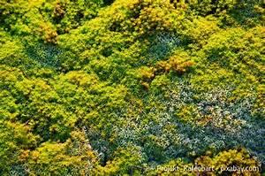 Moos Auf Gartenplatten Entfernen : moos auf dem rasen dauerhaft entfernen die besten tipps garten hausxxl garten hausxxl ~ Michelbontemps.com Haus und Dekorationen