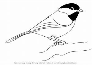 Learn How to Draw a Black-Capped Chickadee (Birds) Step by ...