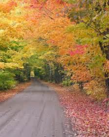 Tree Tunnel Michigan