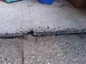 Ameisen Auf Terrasse Bekämpfen Was Tun Gegen Ameisen Auf Der - Ameisen im wohnzimmer