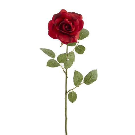 ashland princess rose