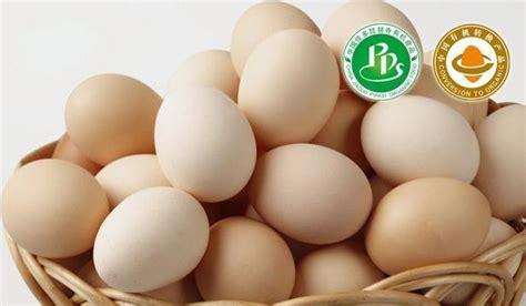 organic eggs organic organic eggs