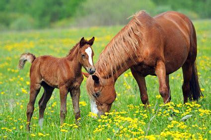 pferde op versicherung fuer brandenburger pferde
