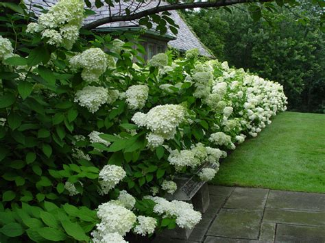 Front Landscaping Ideas Hedges