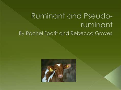 ruminant pseudo ppt powerpoint presentation groves footit rebecca rachel