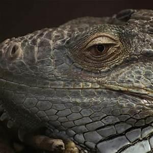 Reptiles | Crocodiles Of The World