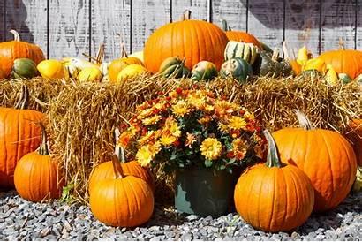 Harvest Fall Display Thanksgiving Area Pumpkin Houston