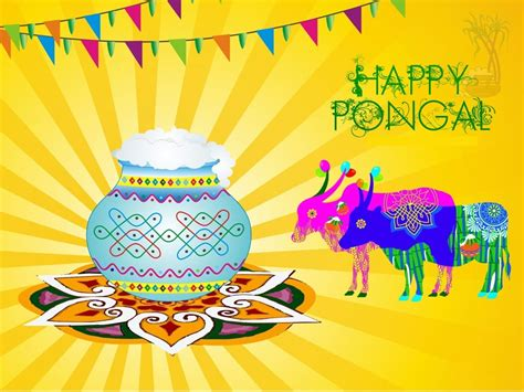 happy pongal  images hd wallpapers pongal pictures