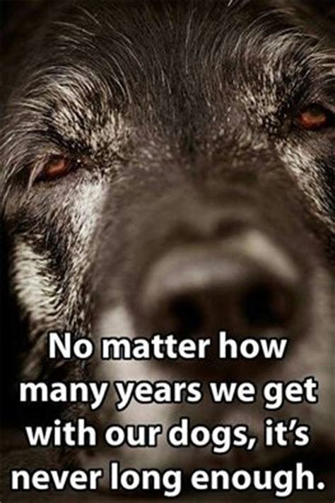 sad quotes death dog