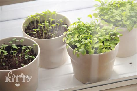 Windowsill Vegetable Garden by Countrykitty Windowsill Vegetable Garden