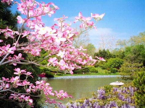 fond d écran fleur scenery wallpaper fond d 233 cran gratuit fleurs