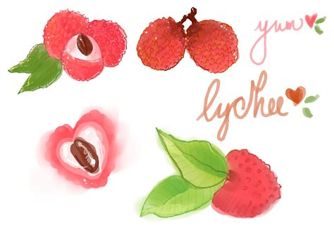 lychee fruit drawing watercolor lychee vector set download free vector art