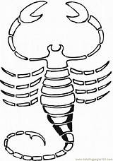 Coloring Scorpions Scorpion Library Clip Symbols Architecture Clipart sketch template