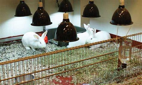 shining uv light rabbit husbandry veterinary medicine