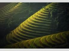 Wallpaper Farm, Village, Bali, 4K, 8K, Nature, #6809