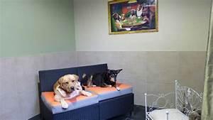 Hotel Pour Chien : hotel de luxe pour chien a paris ~ Nature-et-papiers.com Idées de Décoration