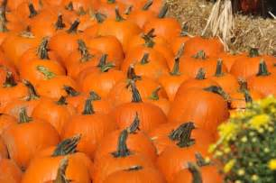 Pumpkin Festival Wv by Don T Miss These 9 Great Pumpkin Patches In West Virginia