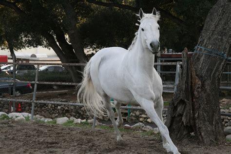horse running wallpapers hd desktop cute deviantart dark animals