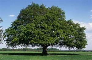 Bilder Bäume Gemalt : hof bockheber alte b ume ~ Orissabook.com Haus und Dekorationen