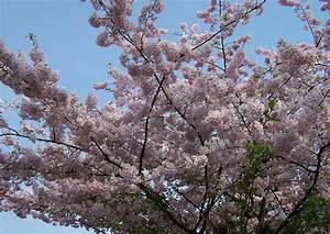 Kleine Bäume Für Den Vorgarten : der sogenannte hausbaum im vorgarten ~ Sanjose-hotels-ca.com Haus und Dekorationen