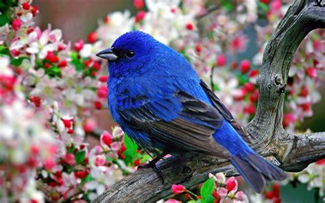 animals nature birds wallpapers hd desktop  mobile