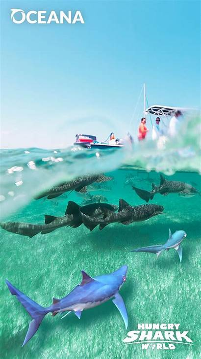 Shark Hungry Protect Oceana Helping Oceans Fins