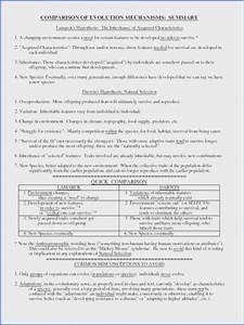 Mitosis Worksheet Diagram Identification Key