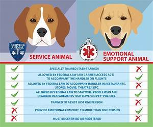 2017 update how to get an emotional support animal for Where can i get an emotional support dog letter