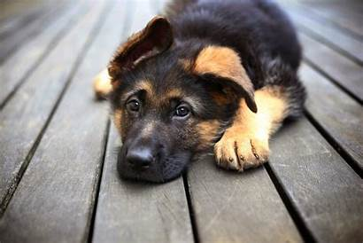 Dog Wallpapers Cool Animal Background Animals Dogs